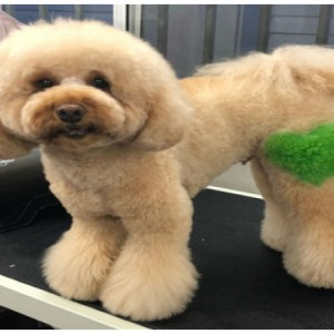 -grooming-groomers-near- Doggydaycare Dogdaycare Brisbane -Balmoral-Norman park -Coorparoo-East Brisbane -Carina-Carindale -Tingalpa-Wynnum -Morningside-Wakerley -Bulimba-Murarrie