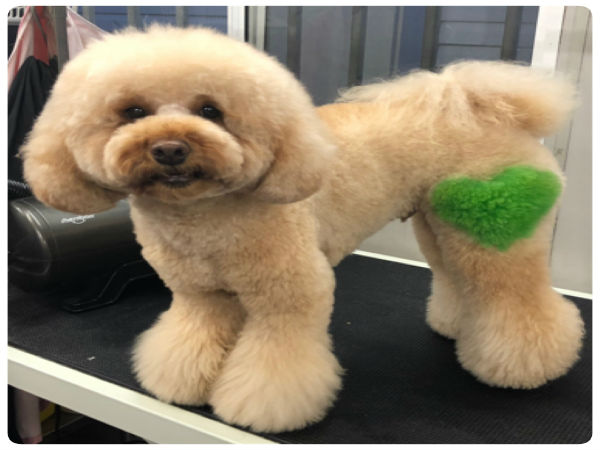 Dog Grooming qualifications and training courses | City ...