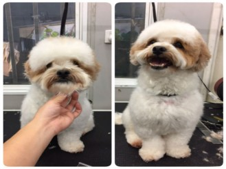 -grooming-groomers-near--Balmoral-Normanpark-Cooparoo-East Brisbane