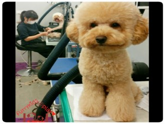 dog-grooming-groomer-dog-day-care-doggydaycare-brisbane-morningside