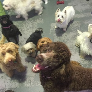Brisbane Dog Day Care