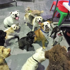 Brisbane Doggy day care center