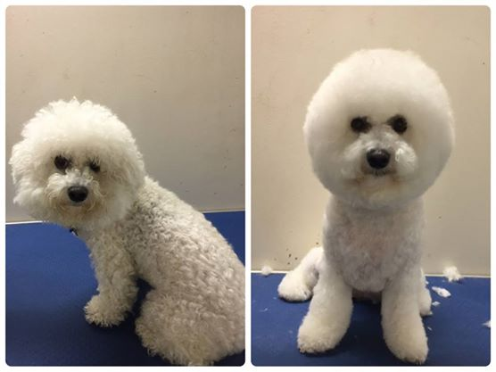 Mobile Dog Grooming Brisbane