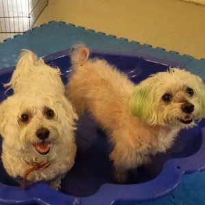 Pool Party at Dog Day Care Brisbane