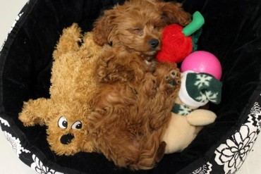 Puppy with toys from FurryKids Store