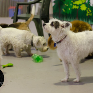 Doggy Day Care BrisbaneFurryKids@Play by Sumico Photography