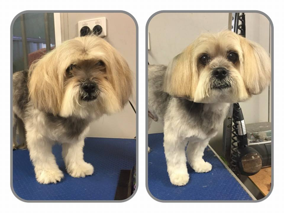 brisbane dog grooming